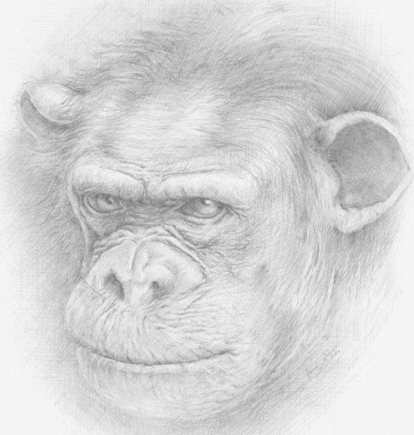 Chimpanze_Dessin_Crayon