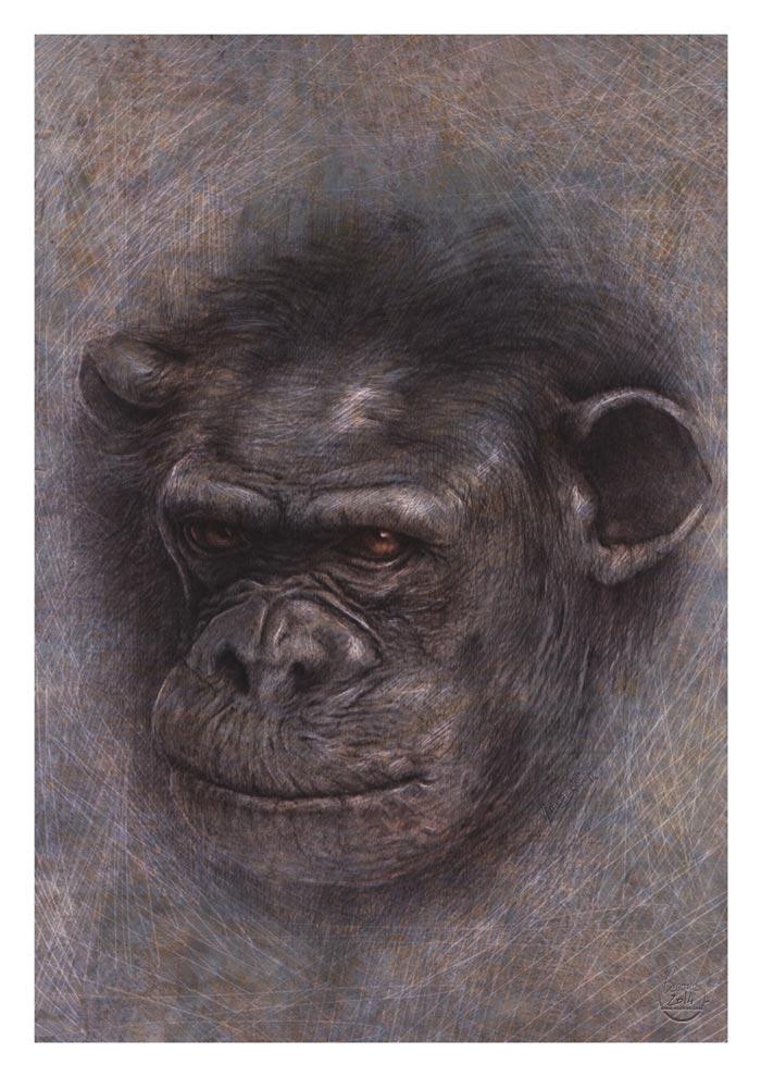 chimp_yann_delahaie_eacone_illustrateur