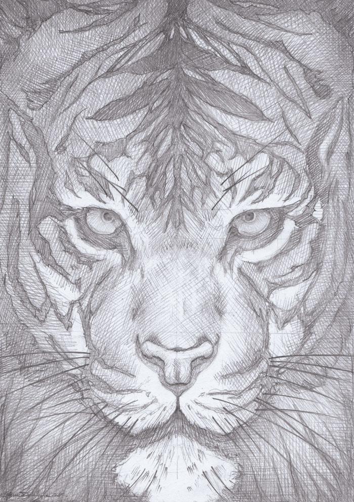 Tigre_Dessin_Crayon