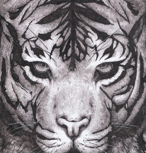 Tigre_Dessin_Encre